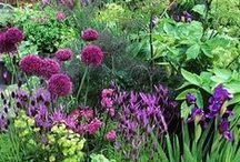 Gardens and Beautiful Flowers / Beautiful, unusual and well tended gardens, pretty flowers, beautiful plants, garden tours.