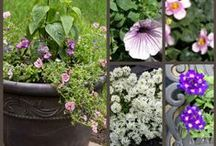 Container Gardening / Interesting containers or flower combinations in containers.