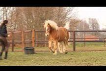 Horse videos