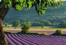Provence + sur de Francia
