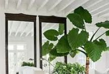Decorar con plantas / Home plants / Ideas para decorar con plantas