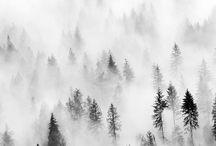 ~Fog~