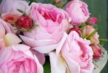rose & róża