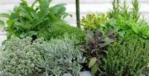 herbs & grow