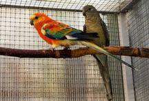 My parrots - moji papoušci