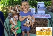 Chewbaaka's Cheetah Friends / Follow along as the Purring Cheetahs travel the world and add photos of your own Cheetah adventures to join the fun!   www.facebook.com/chewbaakascheetahfriends  #chewbaakascheetahfriends
