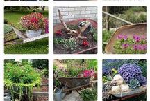 gardening ideas and care