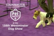 The Westminster Dog Show  / You've watched the Westminster Dog Show on TV for years, but have you ever wondered what it would be like to actually be there in person? STAINMASTER® is hosting an #UnShameYourPet photo contest on their Facebook Page. First prize is a trip for two to New York City to attend the 138th Annual Westminster Kennel Club Dog Show. To enter visit our Facebook Page.  http://on.fb.me/1dLsHKL   #contests #pets #dogs #cats  For official Rules: http://bit.ly/1cNzzm2  / by Stainmaster