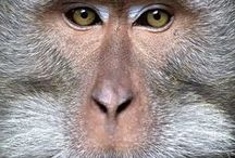 primate ref. / Collection of primate images for inspiration and reference.