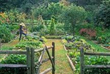 Garden //