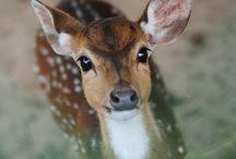 Fauna //