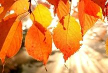Falling Colours / Beautiful Autumn