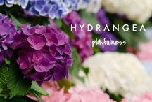 My flowers / Hydrangea, tulips, poenies and all the rest