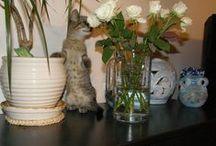 Cats - Katzen - Kočky