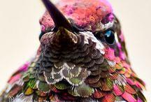 Birdy's!