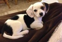 Pet Dog Community Board / Share your favorite pet pin from Pinterest!