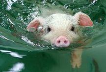 Schweinchen Piggis Piglet