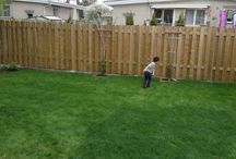 Lawn Care / How to grow a green and healthy lawn.