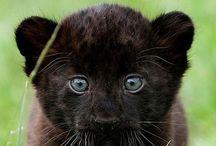 Lullaboo Nature : Baby Animals