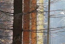 Cinco elementos I - Madera / la madera alimenta al fuego...