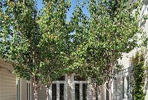 Courtyard Planning