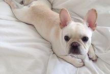 pups / heart throb