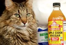 Pet Tips & Homemade Remedies / by Tammy