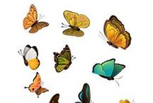 Butterfly Vector Pack / Butterfly Vector Pack includes 11 high detailed vector Butterflies ready to be used in your designs.