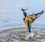 ...Stolen Moments ...amazing Nature & Animal photos / Stolen Moments: amazing nature & Animal photos / ellopott pillanatok ...lenyügöző természet és  állat fotók... (Máté Bence stb,)