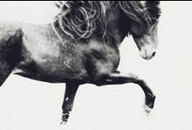 Astrid Harrisson ~ L u m i t r i x / Astrid is an international equine photographer. She has travelled to all corners of the earth, from the mountains of Mongolia to the foothills of the Andes, in a bid to understand more about horses and the cultures where they are found. Astrid is currently represented by galleries in London and Dubai. Her work was recently published in a coffee table book, The Majesty of the Horse.  http://www.lumitrix.com/photographers/astrid-harrisson