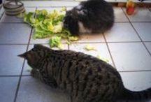 Mein Blog: Kaninchenfan Lucky - Mein Kaninchenloch / Alle Beiträge von meinem Blog (^_^) es geht um meine Tiere (^_~)  #bunny #kaninchen #rabbit #lapin #usagi #cat #katze #neko #dog #hund #gerbil #rennmaus #katzen #cats #pet #pets #haustiere #haustier #karnickel #hase #tier #tiere #animal #animals #artgerechtehaltung #artgerecht #animalwelfare   http://kaninchenfanlucky-meinkaninchenloch.blogspot.de