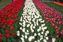 Holanda - Holland / Eventos, fiestas, gastronomía, lugares que visitar... en Holanda // Events, parties, food, places to visit... in Holland