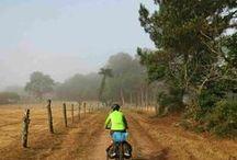 Camino de Santiago - St Jacques' Way / The Way