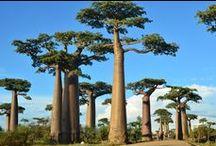 Madagascar / Todos los pines relacionados con la espectacular isla africana