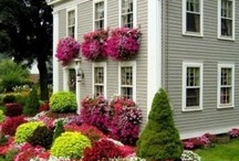 Gardening/flowers