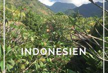Indonesien Reise / Hier findest du alle wichtigen Reisetipps, Erfahrungsberichte, Planungshilfen und Informationen für deine Reise nach Indonesien. Egal ob Rundreise, Individualreise, Tempelbesichtigungen, schnorcheln, Strandurlaub, surfen, essen....