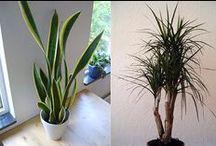 Gardening housplants