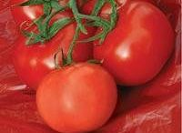 All About Tomatoes! / Who doesn't prefer delicious homegrown tomatoes to the bland, hard ones you find in the local grocery store? Luckily, it doesn't take being a master gardener to produce fresh, flavorful tomatoes in your own backyard! We have just what you need for tomato growing success.