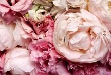 ✿ Gardens, flowers, & Co.✿