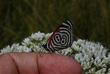 ISENTOS / Alguns insetos que fotografei.