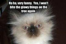 Stuff that makes me laugh / Fun! / by Tina S