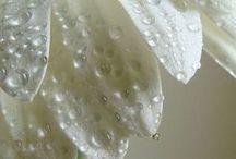 daisys :-)