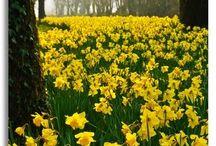 Love Spring!