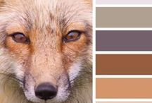Color Palettes / Inspiring color fusion to choose