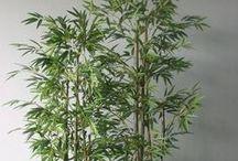 bambus. | bamboo.