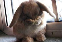 Buns / Bunnies, so cute