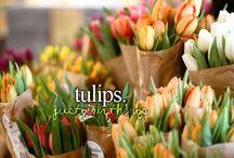 Tulips / My favorite flowers