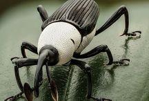 Bug Inspirations