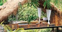 Amazon / Lush green inspiration and culture straight from the Amazon