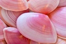 Pink / Sweet pink